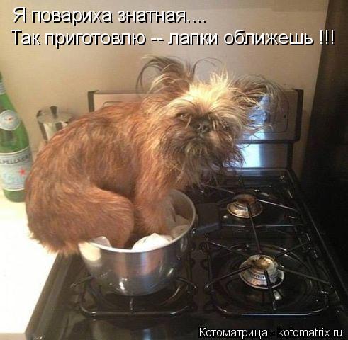 Котоматрица: Я повариха знатная.... Так приготовлю -- лапки оближешь !!!