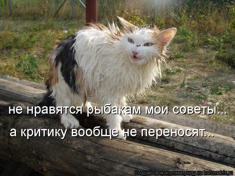 Котоматрица: не нравятся рыбакам мои советы... а критику вообще не переносят...