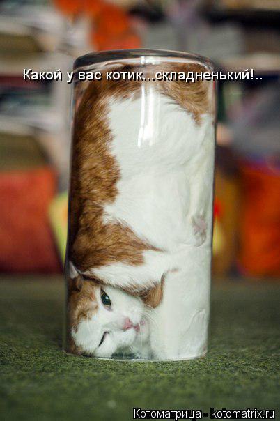 Котоматрица: Какой у вас котик...складненький!..