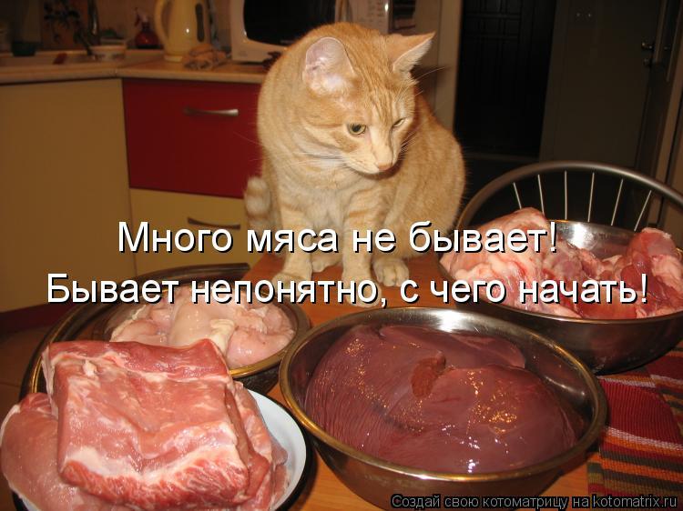 Котоматрица: Много мяса не бывает!  Бывает непонятно, с чего начать!