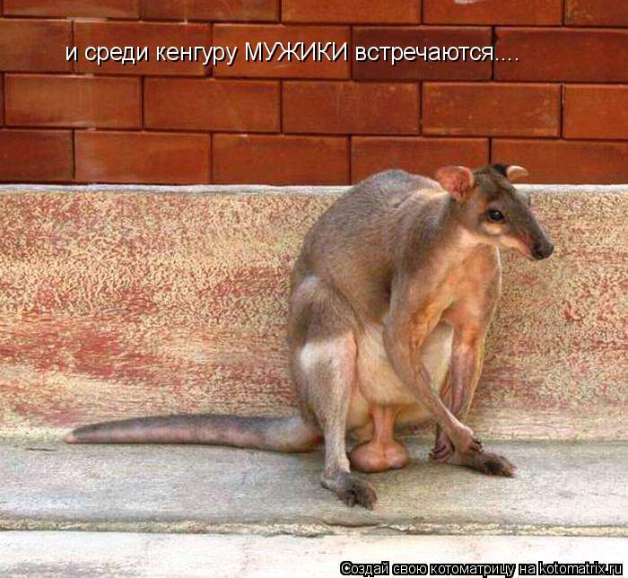 Котоматрица: и среди кенгуру МУЖИКИ встречаются....