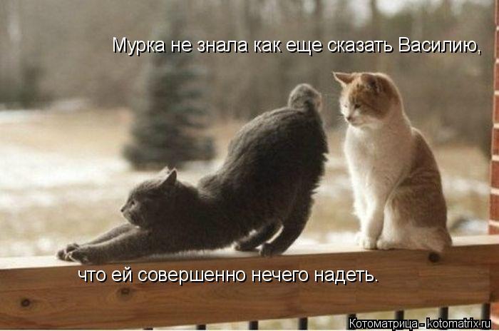 Котоматрица: Мурка не знала как еще сказать Василию, что ей совершенно нечего надеть.