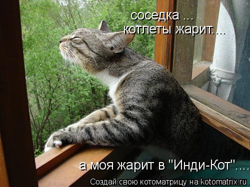 """Котоматрица: соседка ... котлеты жарит.... а моя жарит в """"Инди-Кот""""...."""