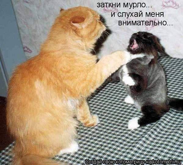 Котоматрица: и слухай меня внимательно... заткни мурло...