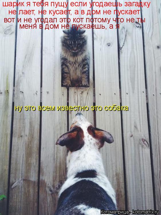 Котоматрица: шарик я тебя пущу если угодаешь загадку не лает, не кусает, а в дом не пускает ну это всем известно это собака вот и не угодал это кот потому ч