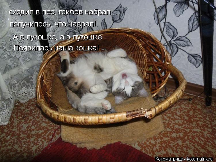 Котоматрица: сходил в лес, грибов набрал... получилось, что наврал!. А в лукошке, а в лукошке Появилась наша кошка!