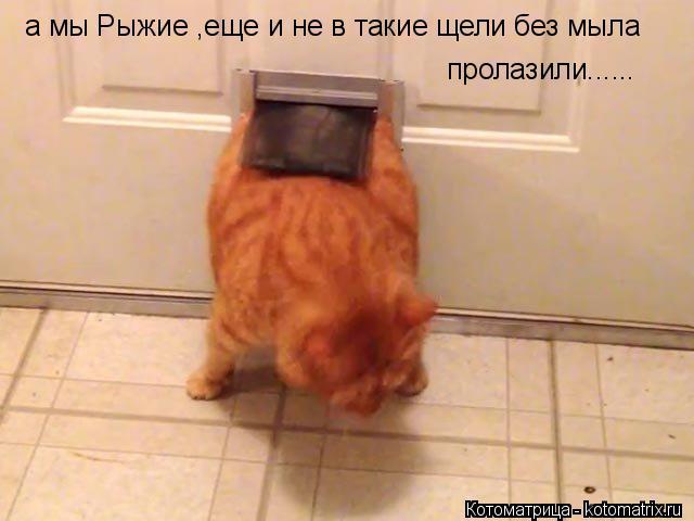 Котоматрица: а мы Рыжие ,еще и не в такие щели без мыла пролазили......