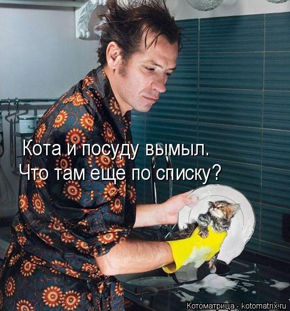 Котоматрица: Кота и посуду вымыл. Что там еще по списку?