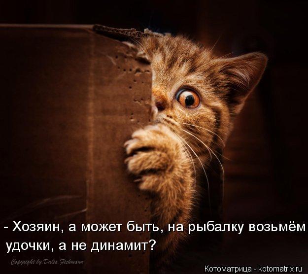 Котоматрица: - Хозяин, а может быть, на рыбалку возьмём удочки, а не динамит?