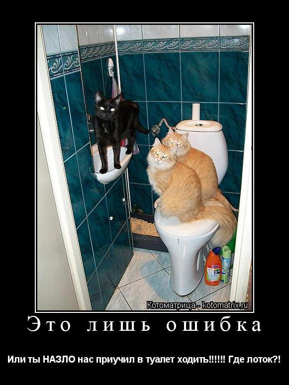 Котоматрица: Это лишь ошибка Или ты НАЗЛО нас приучил в туалет ходить!!!!!! Где лоток?!