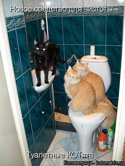Котоматрица: Новое средство для чистоты- Туалетные КОТята