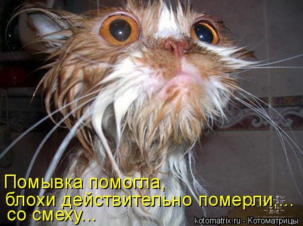 Котоматрица: Помывка помогла, блохи действительно померли,... со смеху...