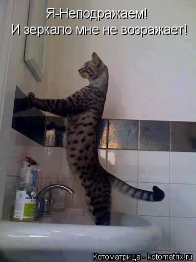 Котоматрица: Я-Неподражаем! И зеркало мне не возражает!