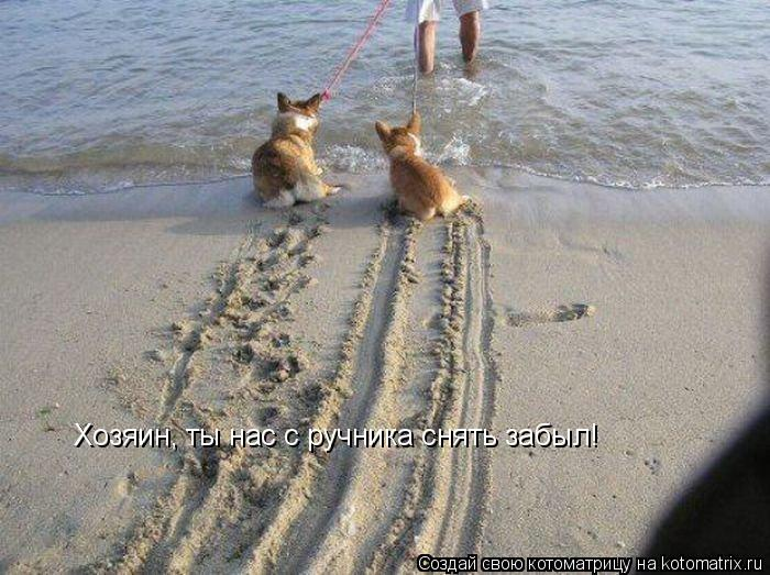 http://kotomatrix.ru/images/lolz/2014/04/15/kotomatritsa_B-.jpg