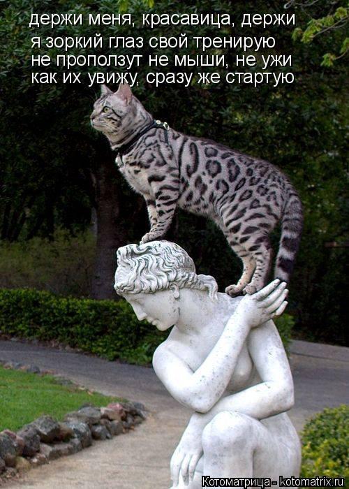 Котоматрица: держи меня, красавица, держи я зоркий глаз свой тренирую не проползут не мыши, не ужи как их увижу, сразу же стартую