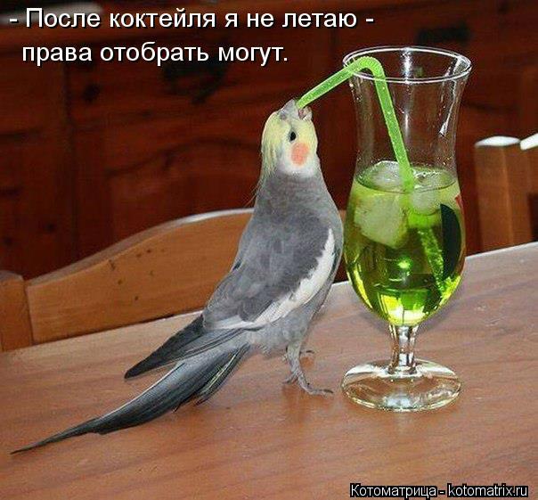 Котоматрица: - После коктейля я не летаю -  права отобрать могут.
