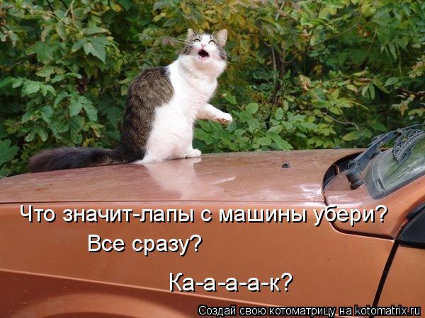 Котоматрица: Все сразу? Ка-а-а-а-к? Что значит-лапы с машины убери?