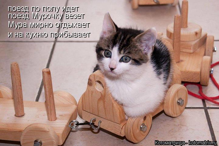 Котоматрица: поезд по полу идет поезд Мурочку везет Мура мирно отдыхает и на кухню прибывает