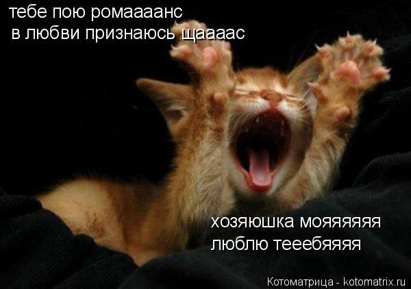 Котоматрица: тебе пою ромаааанс в любви признаюсь щаааас хозяюшка мояяяяяя люблю тееебяяяя