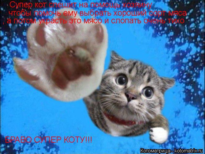 Котоматрица: Супер кот спешит на помощь хозяину чтобы помочь ему выбрать хороший сорт мяса , а потом украсть это мясо и слопать очень тихо БРАВО СУПЕР КО