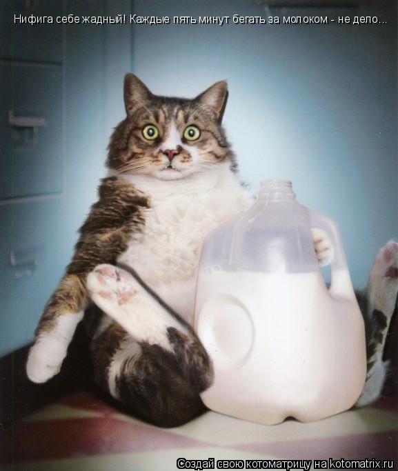 Котоматрица: Нифига себе жадный! Каждые пять минут бегать за молоком - не дело...
