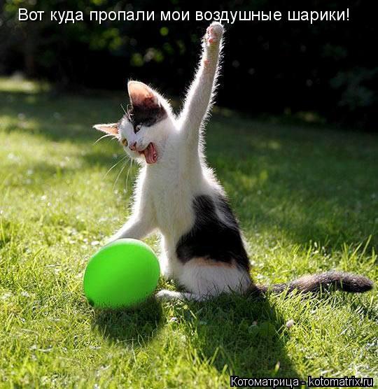 Котоматрица: Вот куда пропали мои воздушные шарики!