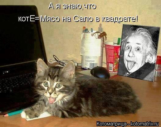 Котоматрица: А я знаю,что котЕ=Мясо на Сало в квадрате!