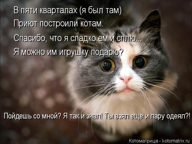 Котоматрица: В пяти кварталах (я был там) Приют построили котам. Спасибо, что я сладко ем и сплю... Я можно им игрушку подарю? Пойдешь со мной? Я так и знал! Т