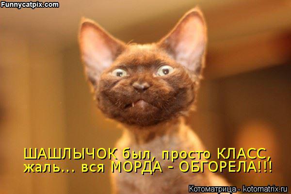Котоматрица: ШАШЛЫЧОК был, просто КЛАСС, жаль... вся МОРДА - ОБГОРЕЛА!!!