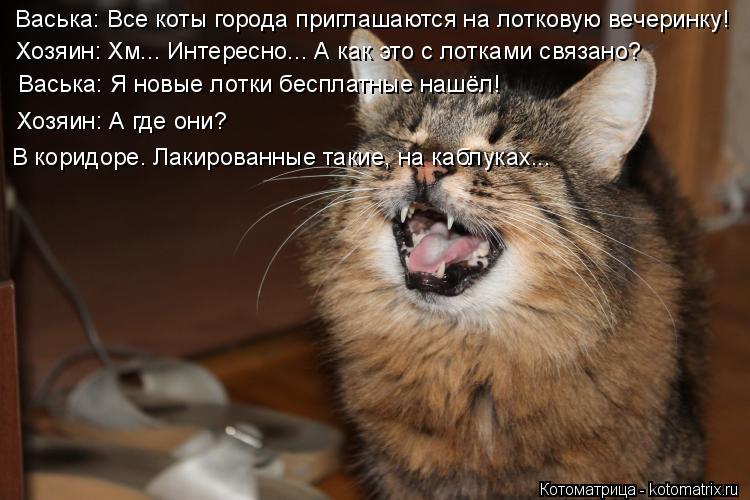 Котоматрица: Васька: Все коты города приглашаются на лотковую вечеринку! Хозяин: Хм... Интересно... А как это с лотками связано? Васька: Я новые лотки беспл