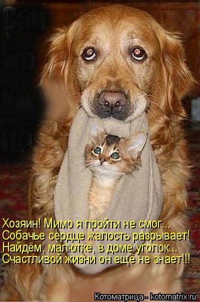 Котоматрица: Хозяин! Мимо я пройти не смог... Собачье сердце жалость разрывает! Найдём, малютке, в доме уголок... Счастливой жизни он ещё не знает!!!