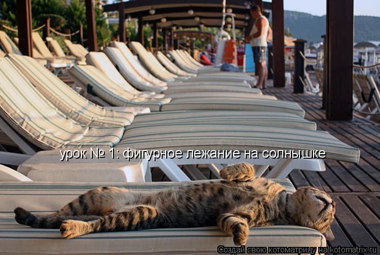 Котоматрица: урок № 1: фигурное лежание на солнышке