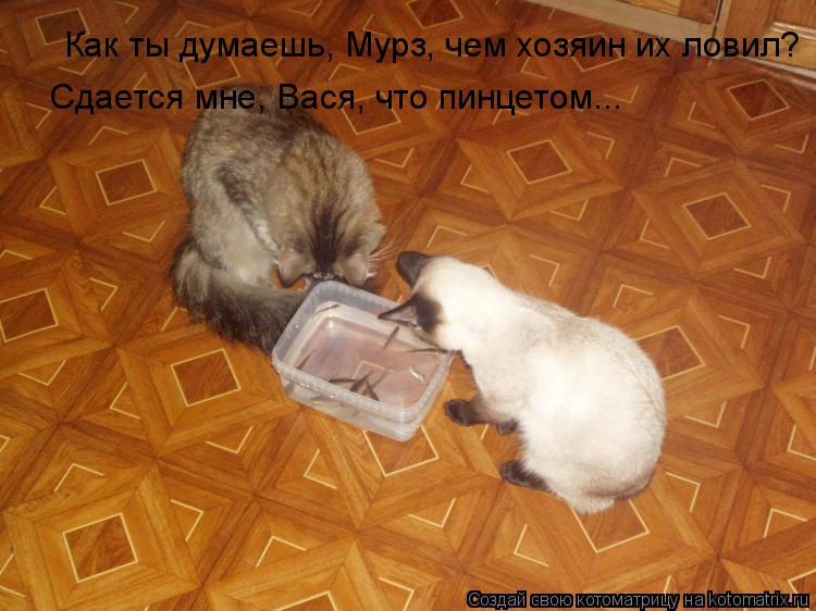 Котоматрица: Как ты думаешь, Мурз, чем хозяин их ловил? Сдается мне, Вася, что пинцетом...