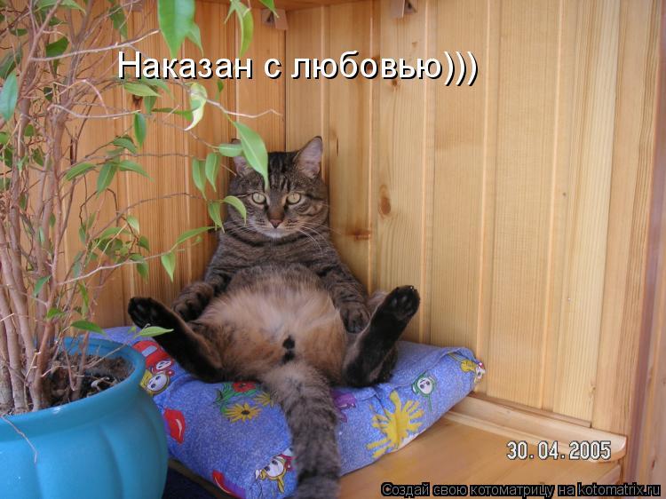 Котоматрица: Наказан с любовью)))