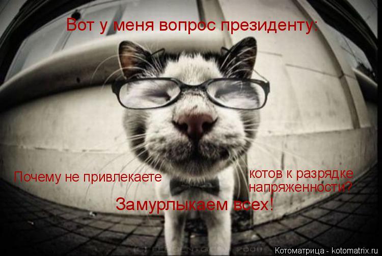 Котоматрица: Вот у меня вопрос президенту: Почему не привлекаете  котов к разрядке  напряженности? Замурлыкаем всех!