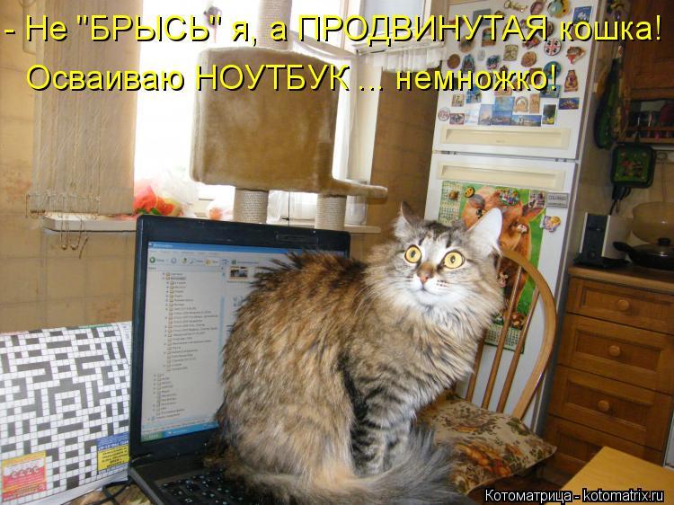 """Котоматрица: - Не """"БРЫСЬ"""" я, а ПРОДВИНУТАЯ кошка! Осваиваю НОУТБУК ... немножко!"""