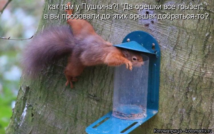 """Котоматрица: как там у Пушкина?! """"Да орешки все грызет..."""" а вы пробовали до этих орешек добраться-то?"""