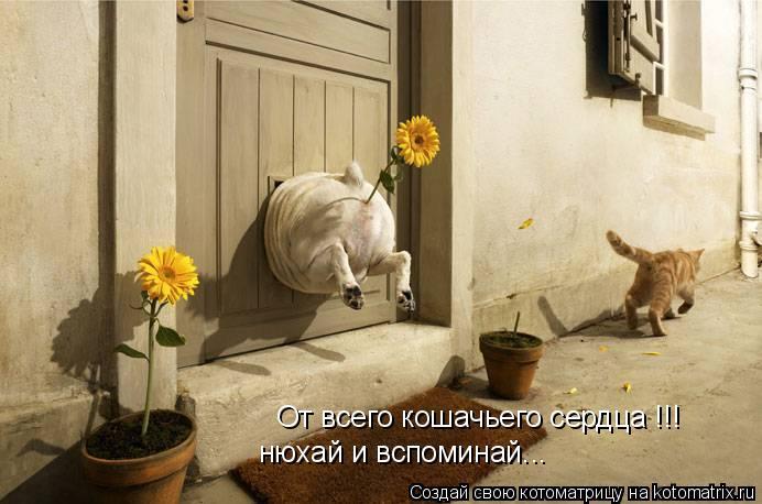 Котоматрица: От всего кошачьего сердца !!! нюхай и вспоминай...
