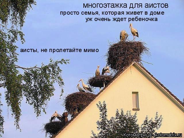 Котоматрица: многоэтажка для аистов просто семья, которая живет в доме уж очень ждет ребеночка аисты, не пролетайте мимо