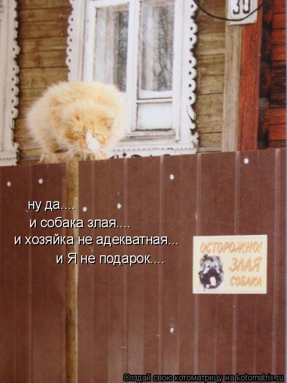 Котоматрица: ну да.... и собака злая.... и хозяйка не адекватная... и Я не подарок....