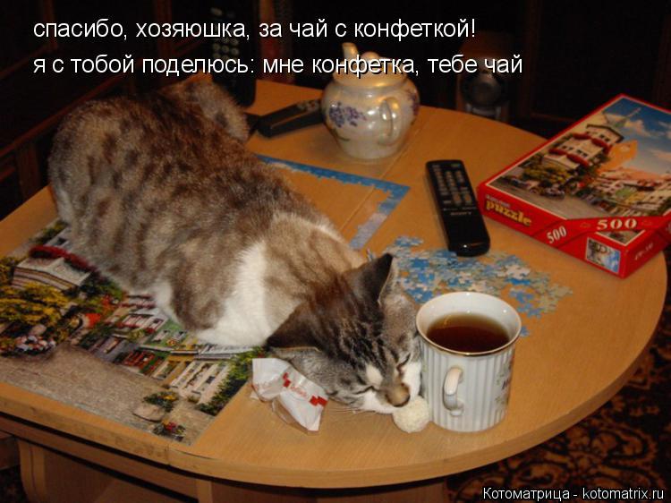 Котоматрица: спасибо, хозяюшка, за чай с конфеткой! я с тобой поделюсь: мне конфетка, тебе чай