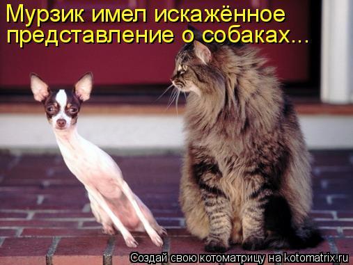 Котоматрица: Мурзик имел искажённое  представление о собаках...