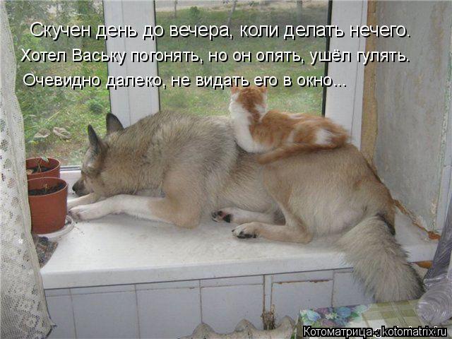 Котоматрица: Скучен день до вечера, коли делать нечего. Хотел Ваську погонять, но он опять, ушёл гулять. Очевидно далеко, не видать его в окно...