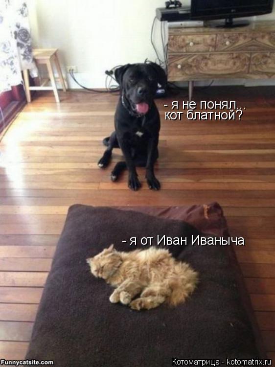 Котоматрица: - я не понял... кот блатной? - я от Иван Иваныча