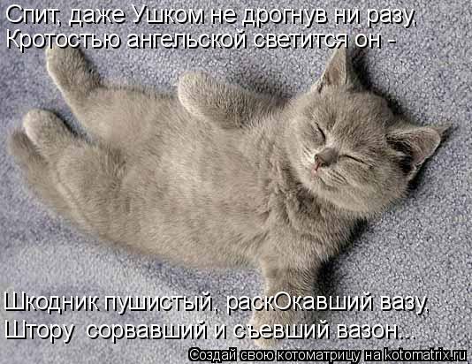 Котоматрица: Спит, даже Ушком не дрогнув ни разу, Кротостью ангельской светится он - Шкодник пушистый, раскОкавший вазу, Штору  сорвавший и съевший вазон.