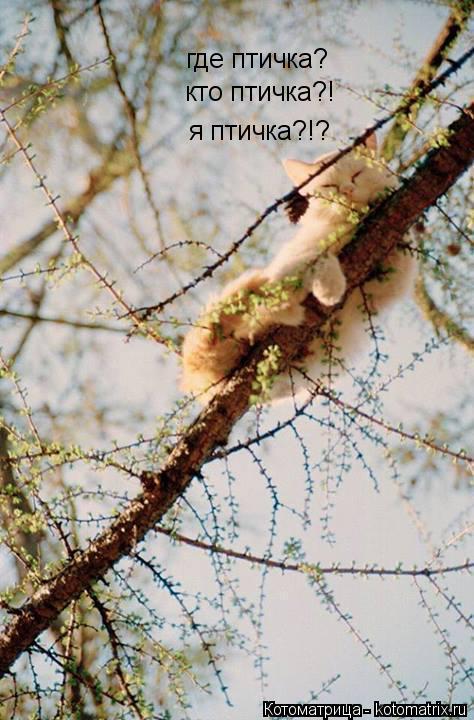 Котоматрица: где птичка? кто птичка?! я птичка?!?