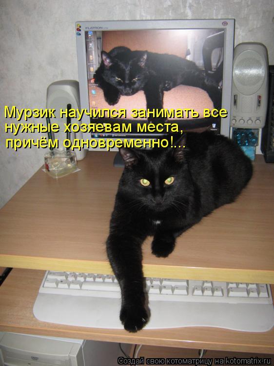 Котоматрица: Мурзик научился занимать все нужные хозяевам места, причём одновременно!...