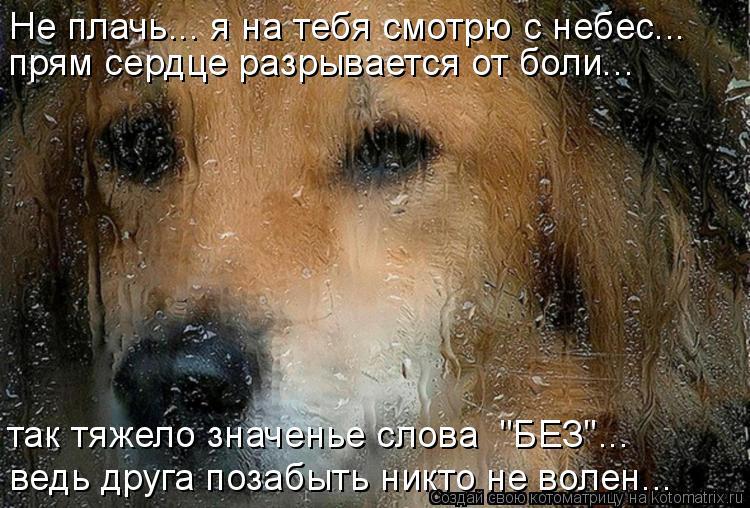"""Котоматрица: Не плачь... я на тебя смотрю с небес... прям сердце разрывается от боли... ведь друга позабыть никто не волен... так тяжело значенье слова  """"БЕЗ""""..."""