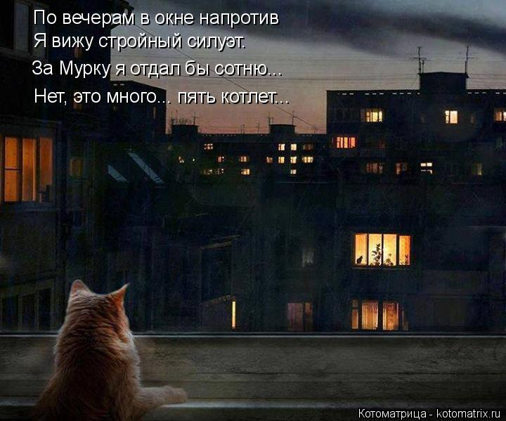 Котоматрица: По вечерам в окне напротив Я вижу стройный силуэт. За Мурку я отдал бы сотню... Нет, это много... пять котлет...
