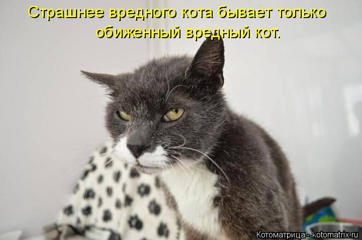 Котоматрица: Страшнее вредного кота бывает только обиженный вредный кот.